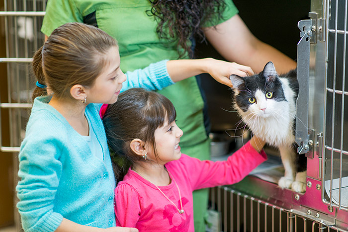 Kids can earn money while learning about a cause. These two children are petting a cat at a kennel.